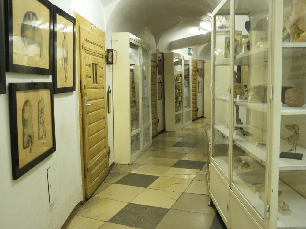 Narrenturm/ Pathologisch-Anatomische Sammlung - NHM - FALTER Event ...