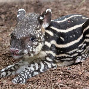 PANDAstarker Artenschutztag