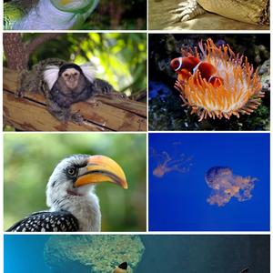 Aqua Terra Zoo